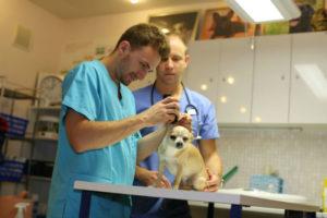 veterinārārsts