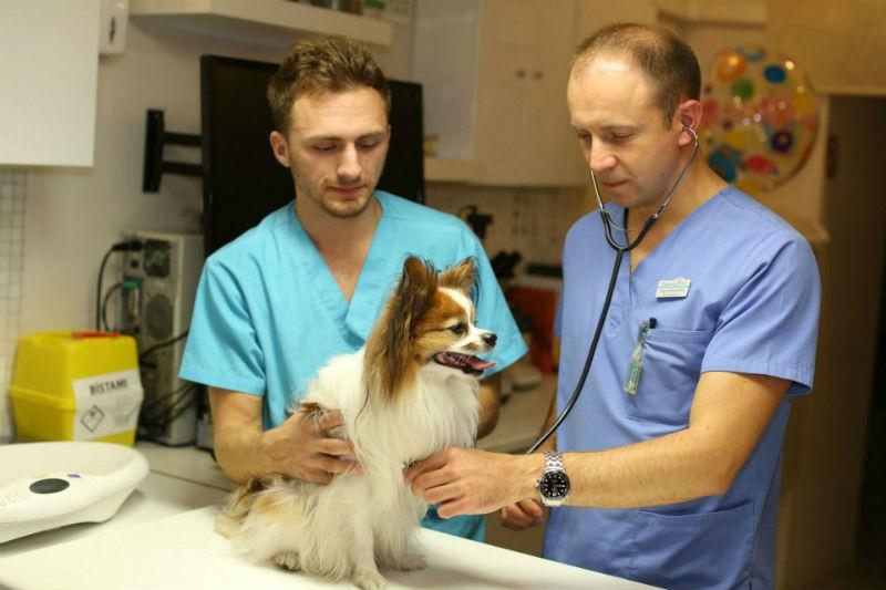 Vizīte pie veterinārārsta