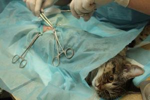 ķirurģija klīnika